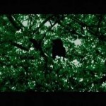 Video for Insect O. – Birds Over Hong Kong (Marko Fürstenberg's The Peak Remix)