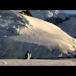 """Video for Insect O. """"Echoes of Antarctica"""" from ETUILTD002"""