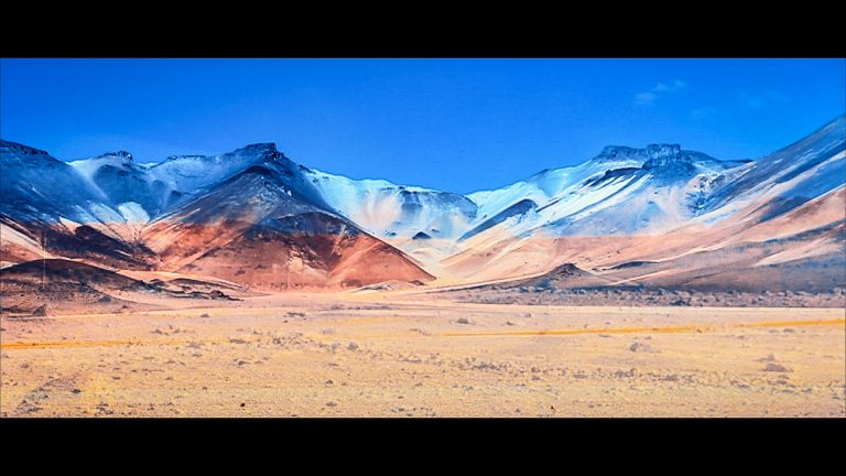Insect O. - Atacama