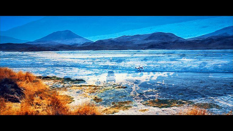 Insect O. - Atacama - Official Video